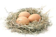 Organic eggs in a nest of hay on white background. Three fresh brown chicken eggs lie in a nest of hay on white background Stock Images