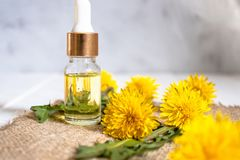 Organic essential oil in a small glass jar with green leaves and dandelion flowers on the table. Flower essential oil stock photography