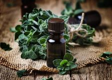 Organic essential oregano oil in a glass jar and a bunch of fresh marjoram, vintage wooden background, selective focus royalty free stock photography