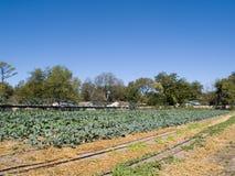 Organic farm Stock Photo