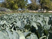 Organic farm Stock Photos