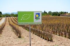 The organic farm for Aloe vera growing Royalty Free Stock Photo