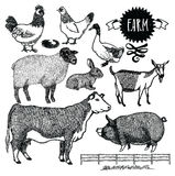 Organic farm Animals set. Objects Royalty Free Stock Images