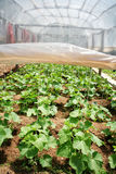 Organic farm Royalty Free Stock Images