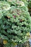 Organic farm Royalty Free Stock Image