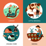 Organic Farm 4 Flat Icons Banner. Organic farm 4 flat icons square banner with cattle breeding sowing and harvesting abstract  vector illustration Royalty Free Stock Photography
