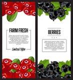 Organic farm fresh berry flyer set Stock Images