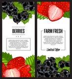 Organic farm fresh berry flyer set Stock Photography
