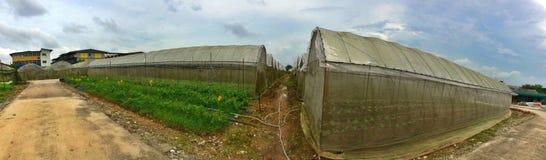 Organic farm greenhouses Stock Image