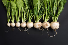 Organic, farm grown white turnips isolated on black Stock Photos