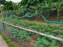 An organic farm on the Lantau Island, Hong Kong. Gardening beds in a small local organic farm royalty free stock images