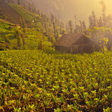 Organic farm with little house royalty free stock images