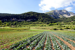 Organic farm at mountains  Royalty Free Stock Photo