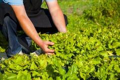 Organic farm. Farm and organic farm in Orletta, Corsica, France Stock Image