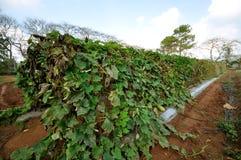 Organic farm Stock Photography