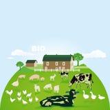 Organic farm and pasture Stock Photos