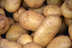 Organic farm potatoes Royalty Free Stock Photos