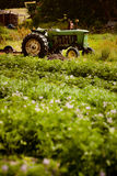 Organic farm scene Royalty Free Stock Images