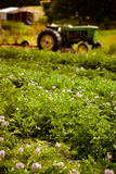 Organic farm scene Royalty Free Stock Photos