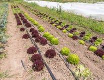 Organic Farm Stock Image