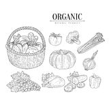 Organic Farm Vegetables  Hand Drawn Realistic Sketches Stock Photography