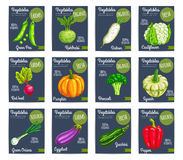 Organic farm vegetables vector price cards Royalty Free Stock Photography