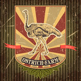 Organic farm vintage label with ostrich on the grunge background. Royalty Free Stock Photo