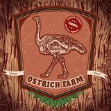 Organic farm vintage label with ostrich on the grunge background. Stock Photos