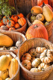 Organic Farmed Pumpkin and Squash Harvest Season. Orange pumpkin and yellow squash filled baskets soaking up the sun at sunrise in October Stock Photos