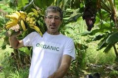 Organic farmer carrying bananas Stock Images