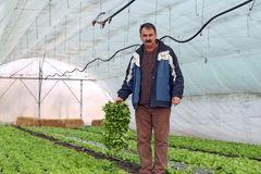 Organic Farmer in Greenhouse. Organic farmer holding tray of seedlings in greenhouse Stock Photography