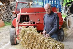 Organic farmer making/stack bales Royalty Free Stock Photo