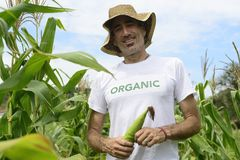 Organic farmer in okra plantation Stock Photos