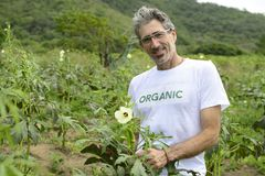 Organic farmer in okra plantation Royalty Free Stock Photos