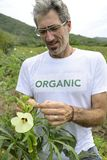 Organic farmer in okra plantation Stock Image