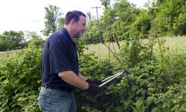 Organic Farmer Pruning His Raspberry Plants Royalty Free Stock Photo