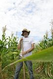 Organic farmer showing corn inside the plantation Stock Photography