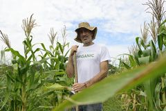 Organic farmer showing corn inside the plantation Royalty Free Stock Photo