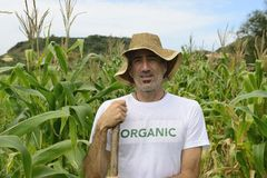Organic farmer showing corn inside the plantation Stock Image