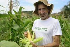 Organic farmer showing corn inside the plantation Stock Photo