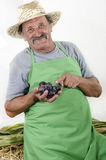 Organic farmer with some plums in his hand. Organic farmer holding freshly picked plums in his hand Stock Image