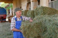 Organic farmer stack bales Stock Image