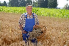 Organic farmer standing in a wheat field Royalty Free Stock Image