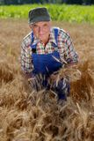 Organic farmer standing in a wheat field Royalty Free Stock Photography