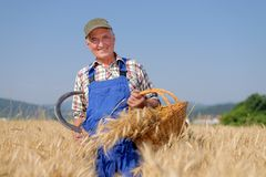 Organic farmer standing in a wheat field Stock Photography