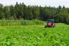 Organic farmer in tractor mowing clover field with rotary cutter Royalty Free Stock Image
