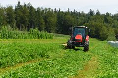 Organic farmer in tractor mowing clover field with rotary cutter Royalty Free Stock Photos