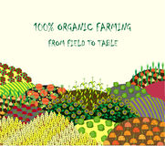 Organic farming background. Frame with plenteous fields landscape Stock Photography