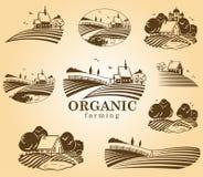 Organic farming design elements. Royalty Free Stock Photos