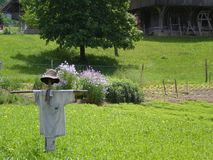 organic farming with scarecrow stock images
